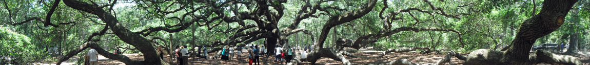 The amazing Angel Oak Tree on Johns Island, SC