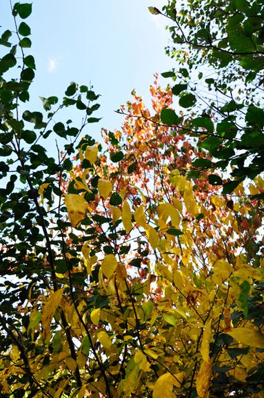 The Two Rv Gypsies Enjoyed Fall Foliage In Pennsylvania 2014