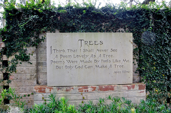 poem on tree plantation You are here home » classroom resources » exploring trees through a poem   extension activity: planting and adopting a tree the teacher.