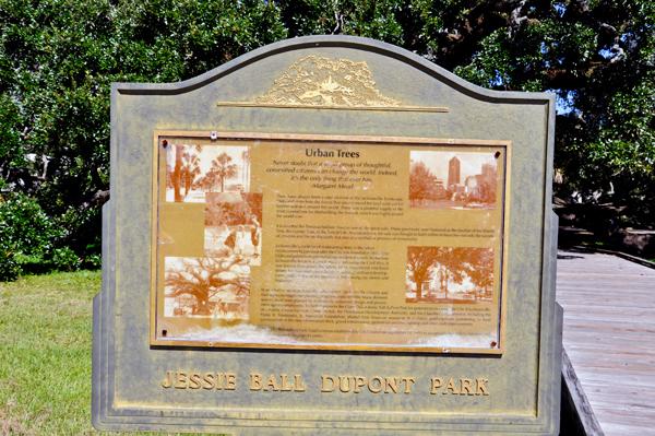the treaty oak jessie ball dupont park and friendship park. Black Bedroom Furniture Sets. Home Design Ideas