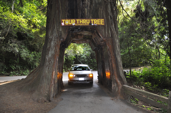 The two RV Gypsies drove through the middle of the Redwood Tree #2