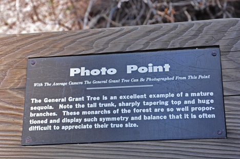 photo point for General Grant tree