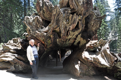 Lee and the roots of a sequoia tree